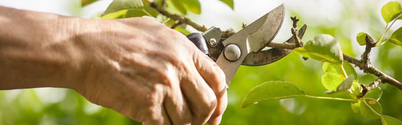 Pruning_img